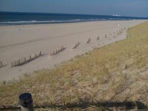 De hekken onderaan het duin van Maasvlakte 2