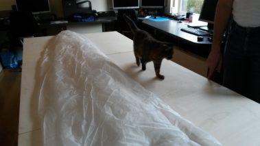 Kat loopt naast noodparachute